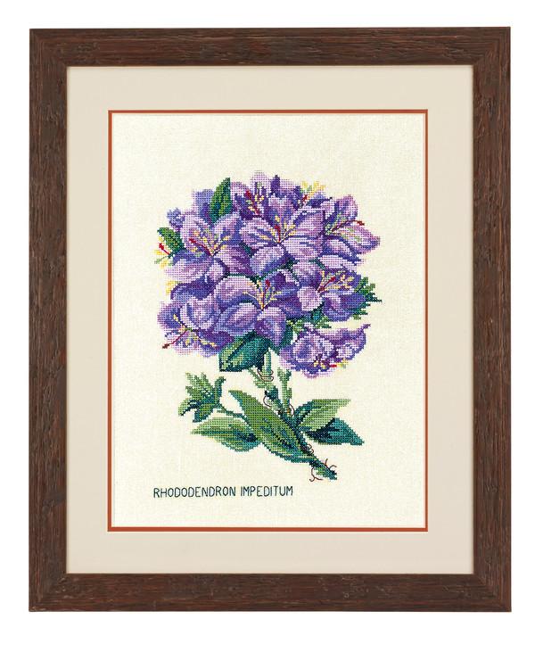 Bilde Rhododendro