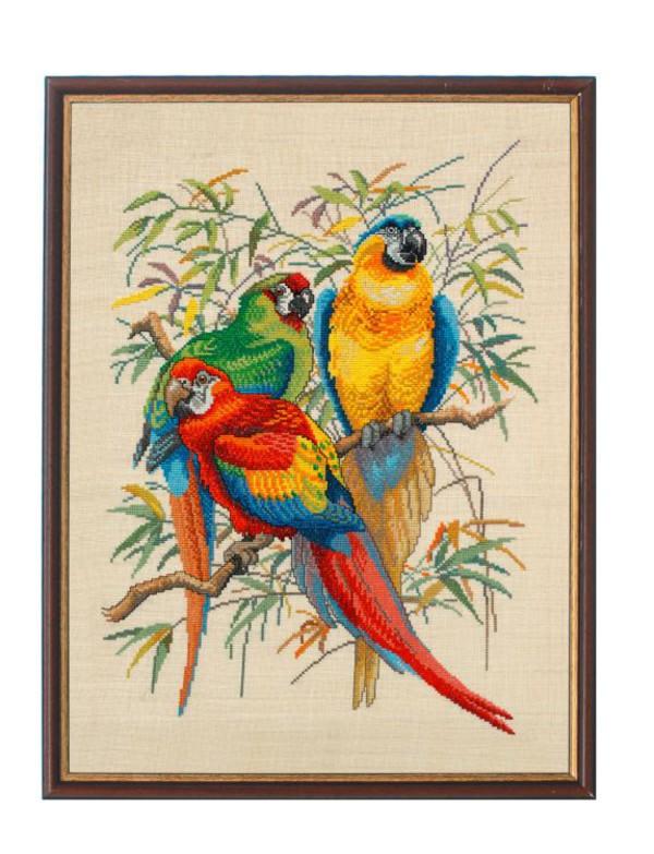 Billede Papegøjer