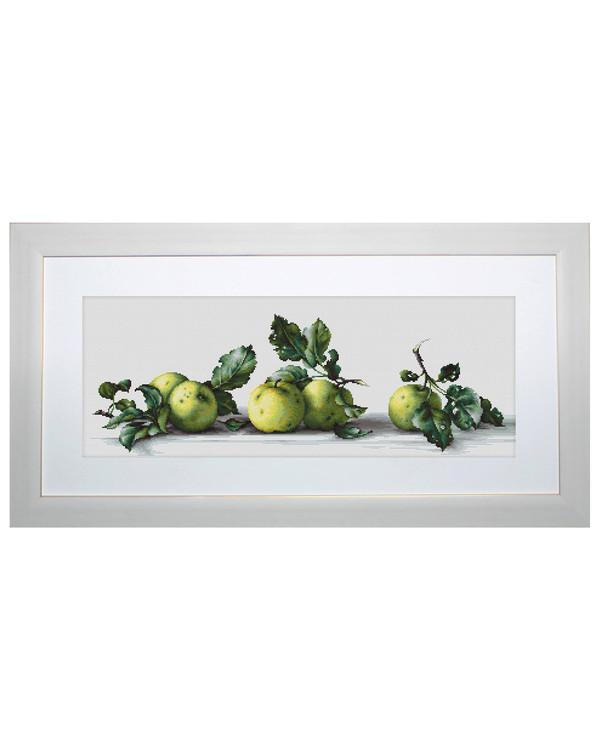 Billede Grønne æbler på rad