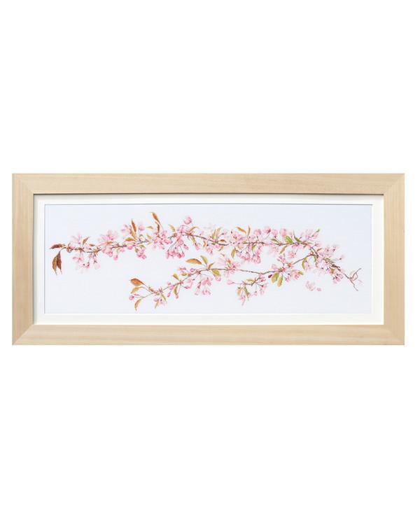 Bilde Kirsebærblomst