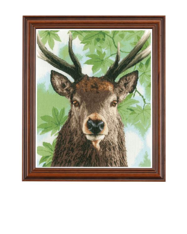 Bilde Rød hjort