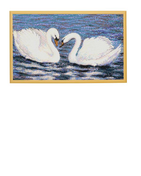 Bilde Hvite svaner
