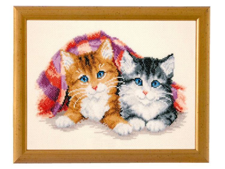 Bilde Søte kattunger