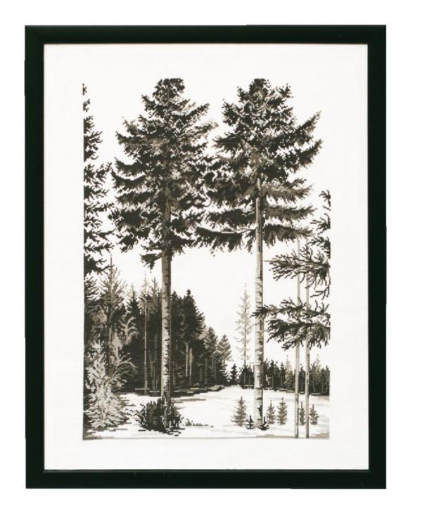 Billede Skovlysning