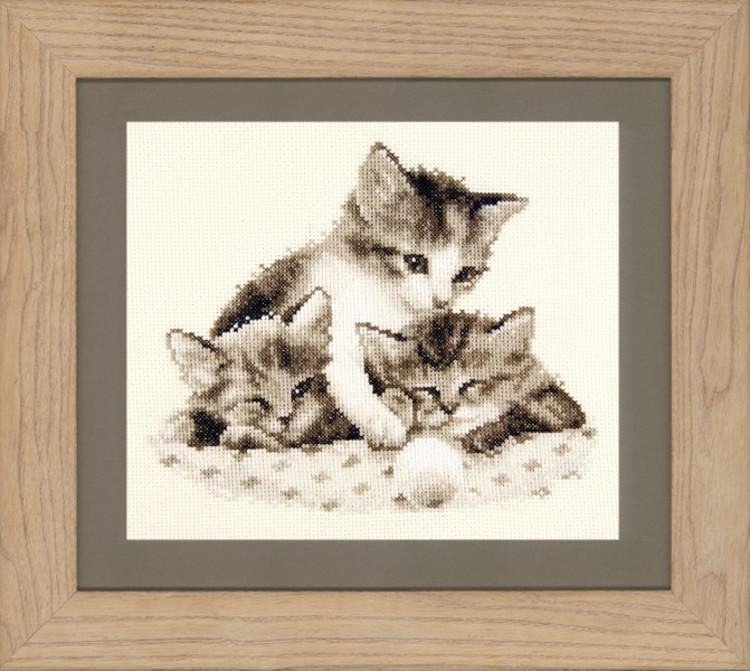 Billede Trætte kattekillinger