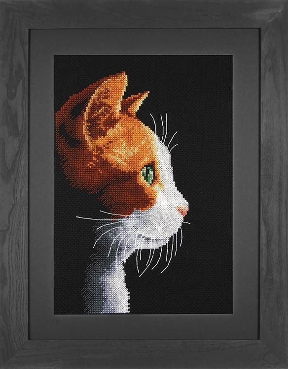 Bilde Katt i profil