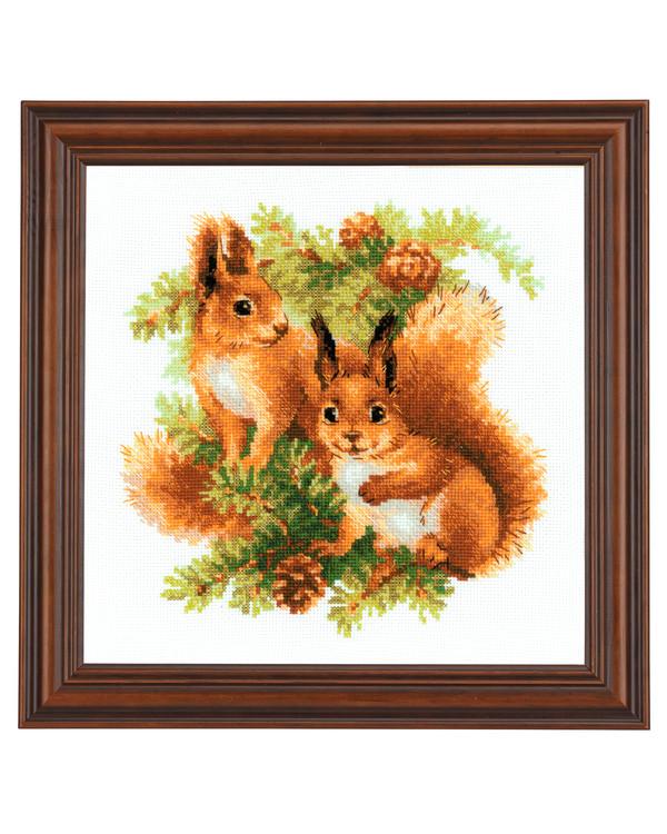 Bild Eichhörnchen in der Tanne