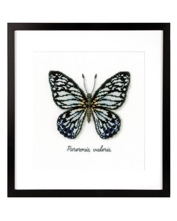 Billede Blå sommerfugl