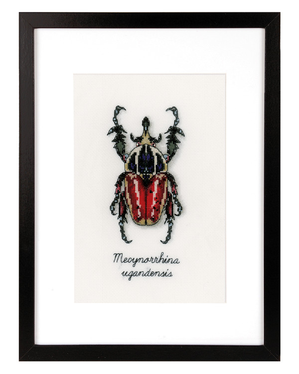 Bild Roter Käfer