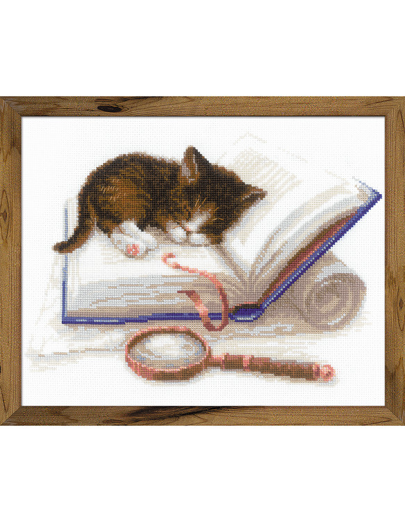 Bild Katze im Buch