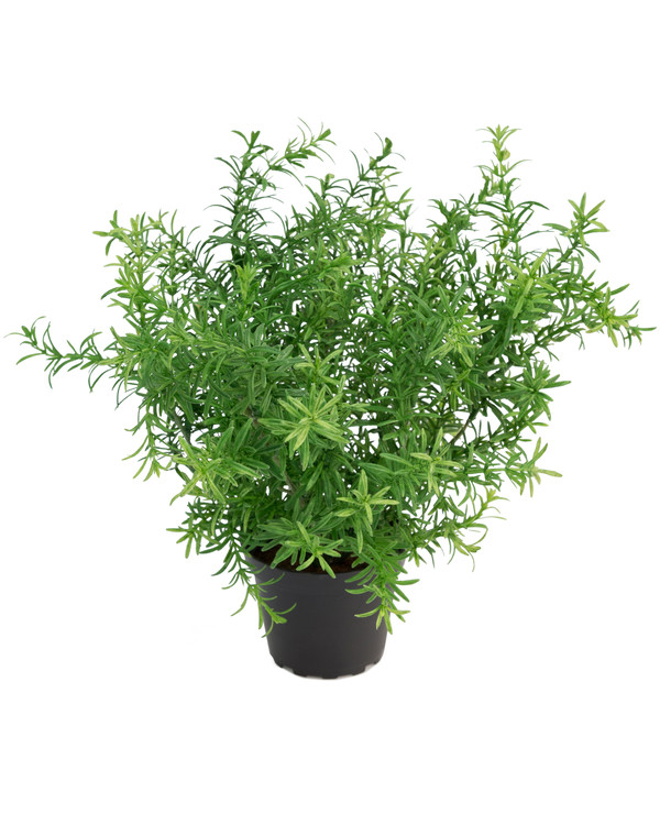 Kunstplante Asparges 28 cm