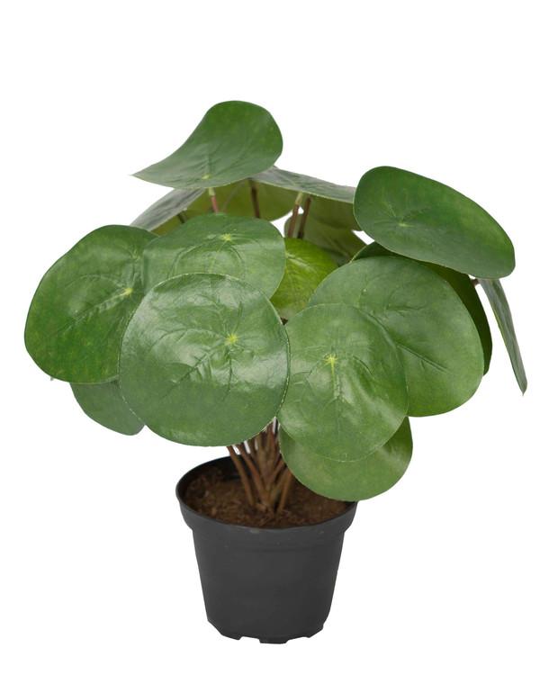 Kunstplante Elefantøre 25 cm